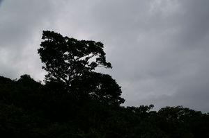 PICT3849a